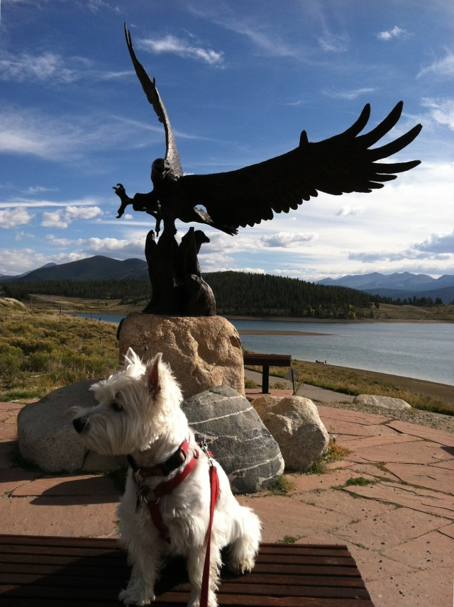 Westie and Eagle