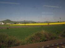 Canola/rapeseed fields are EVERYwhere. Don't leave home without them.
