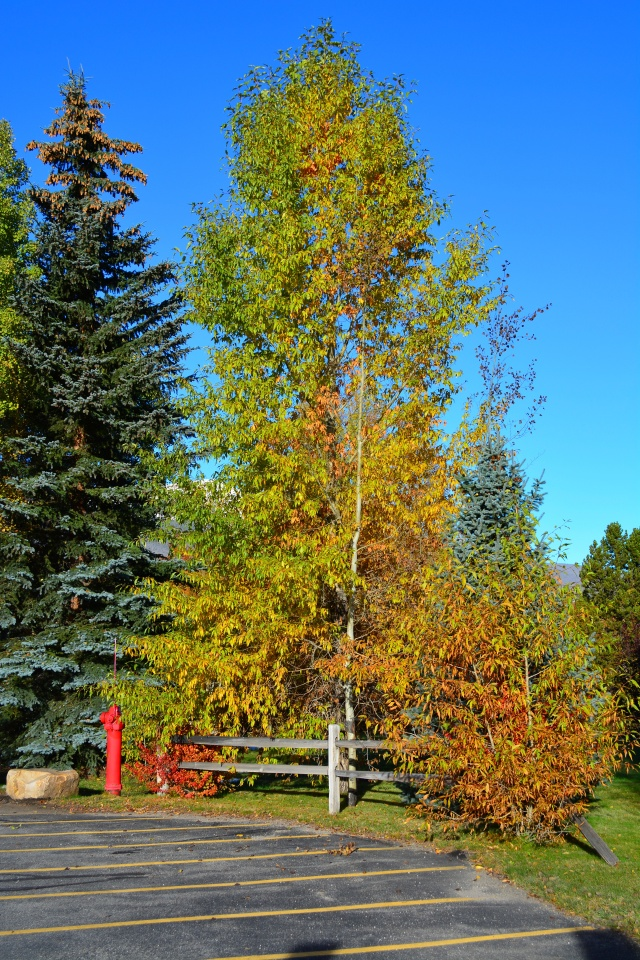 Rust is the main color of Indian Summer.