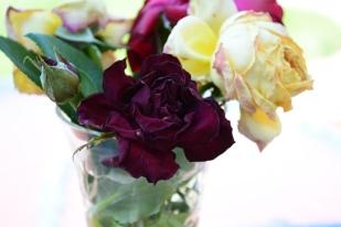 The Dead Rose Society. Nikon D5200 18-55mm lens.
