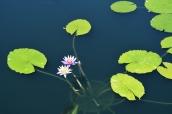 The Monet Pool.