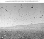 LocustsIran1952