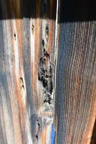 Aging cedar fence